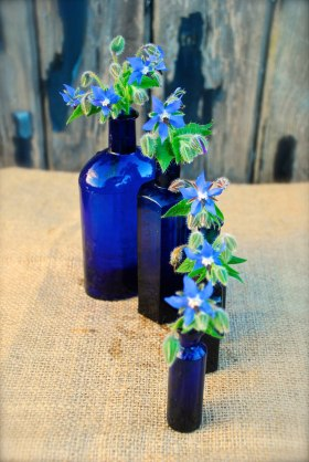 Cobalt blue glass bottles filled with tiny borage flowers