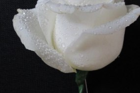 Rose Button Hole, Occasion Angel