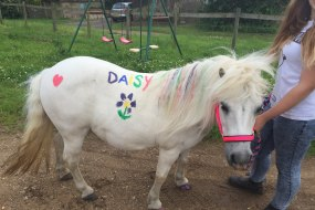 Daisy's Pony Parties