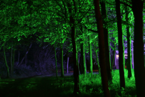 Woodland Wedding Lighting - EWPSL