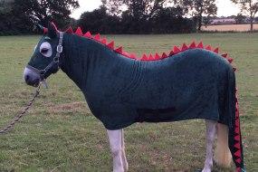 Dragon & knights Pony Parties