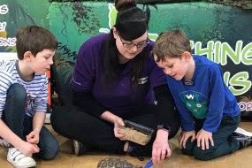 Teaching Talons (The Animal Ambassadors)