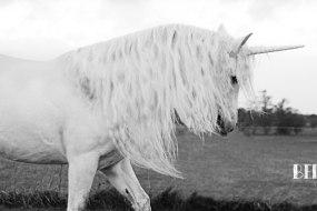 black and white image of a unicorn
