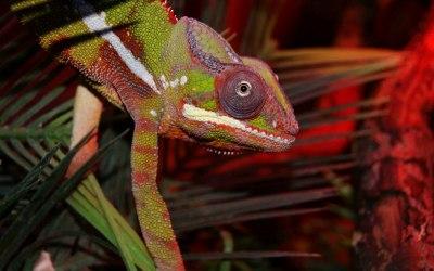 Exotic Pet Parties 7