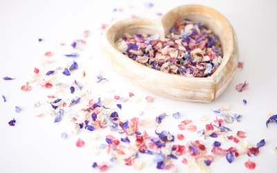 Rainbow Delphinium Petal Confetti