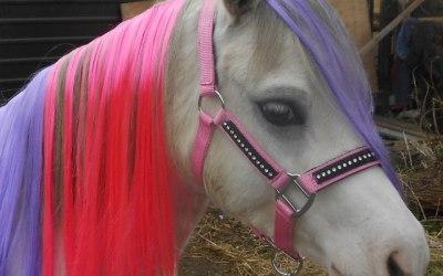 Stardust Pony Parties 2