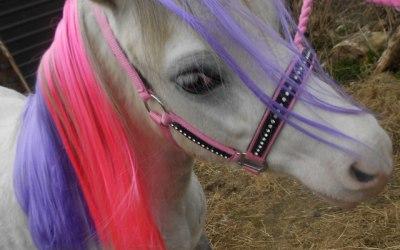 Stardust Pony Parties 1