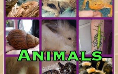 Party Animals Lurgan