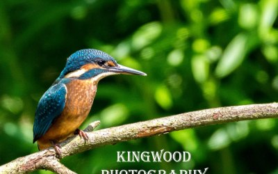 Kingwood Photography
