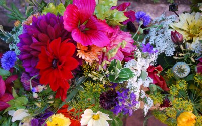 Rosacanina Flowers 5