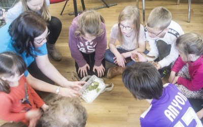 Animal Experiences with Lion Learners 4