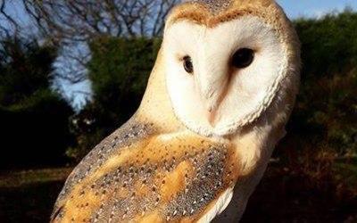 Nature's Burrow Animal Encounters 1