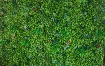 """Our Fabulous """"Clare"""" greenery Wall"""