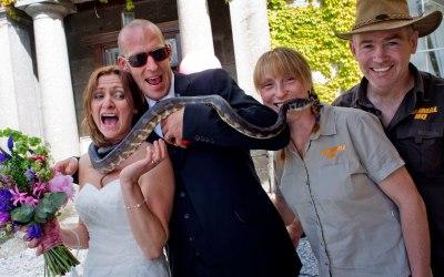 snakes at a wedding