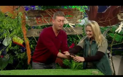 Living Things in the Big Brother house with Fider the Spider