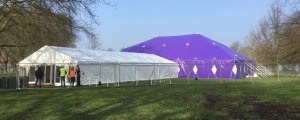Purple bigtop