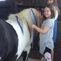 Therapeutic Equine Assisted Learning CIC