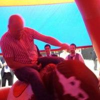 Rodeo bull hire